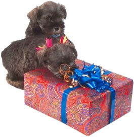 dogs and birthday present 3