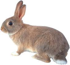 baby bunny 17