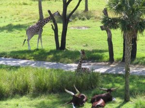 Savannah View at Animal Kingdom Lodge